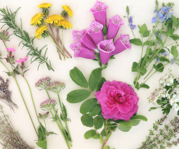 1-2-curso-segundo-ano-flores